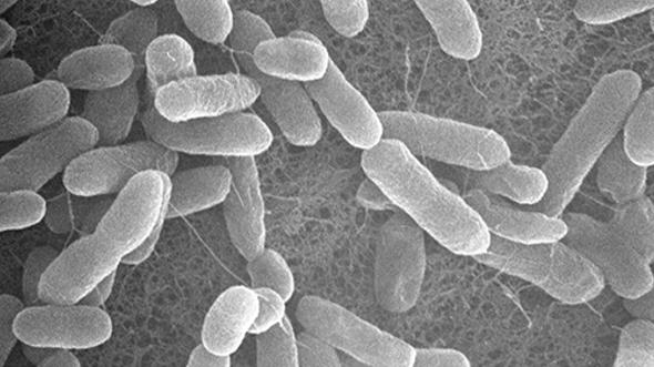 ヤクルト 抗生物質 下痢